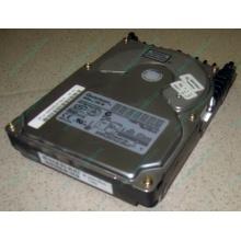 Жесткий диск 18.4Gb Quantum Atlas 10K III U160 SCSI (Батайск)